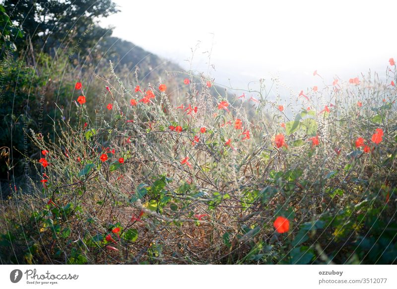 flowers blossoms in the wild nature outdoor sunlight copy space background plant red day grass selective focus wilderess