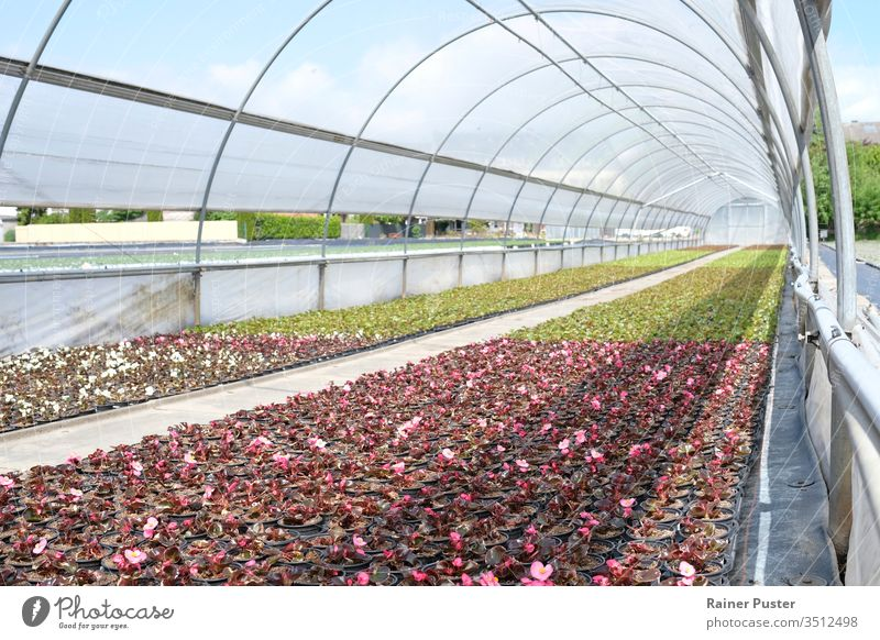 Flowers in a green house on a sunny day agricultural agriculture cultivate cultivation farm farming field flora floral flower food garden gardening glass