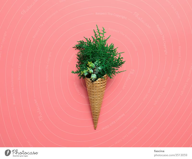 Bouquet of cypress branches in ice cream cone christmas winter xmas concept december tree hipster creative background minimal food summer year new abstract art