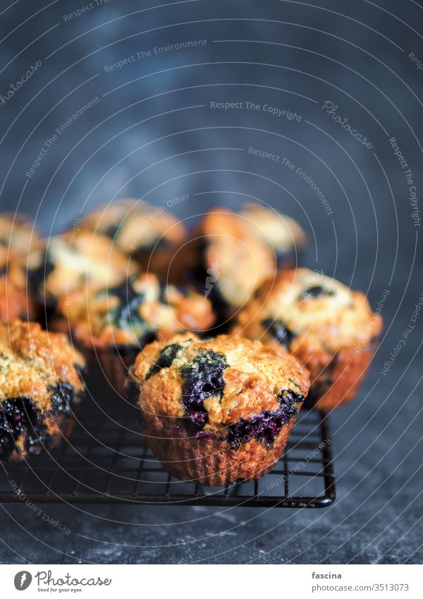 Homemade blueberry muffins on dark background. blueberries blueberries muffins copy space egg-free american cooking homemade low calories yummy nobody above