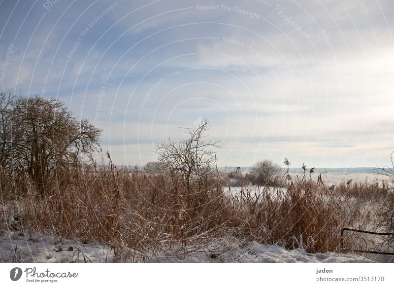 advent greeting. pond Winter Water Pond Frost Snow Ice Exterior shot Deserted Frozen Subdued colour Copy Space top Cold Environment White Blue Weather Nature