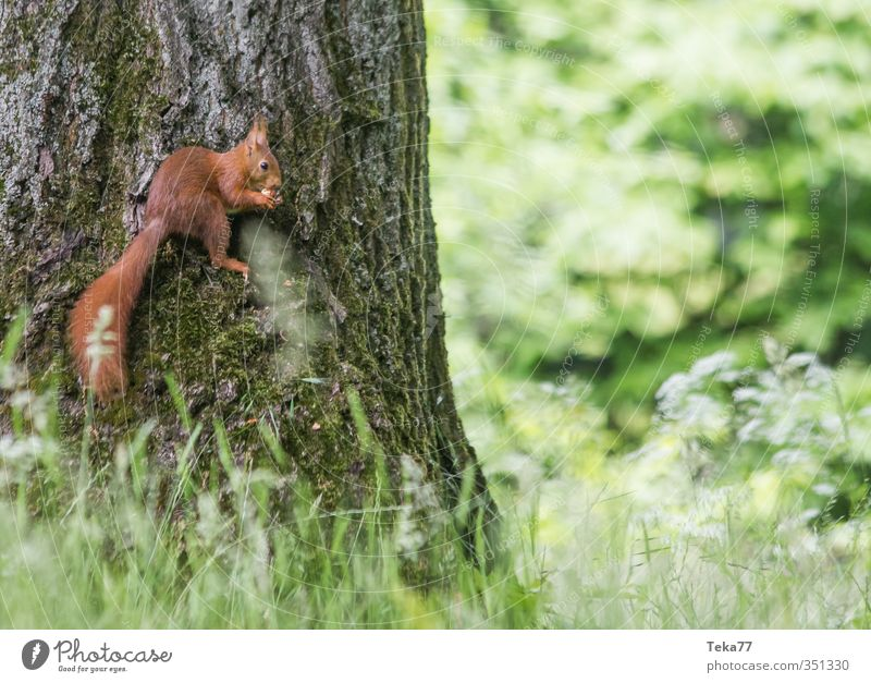 Nature Plant Tree Landscape Animal Environment Grass Wild animal Contentment Adventure Pelt Paw Stagnating Squirrel Claw