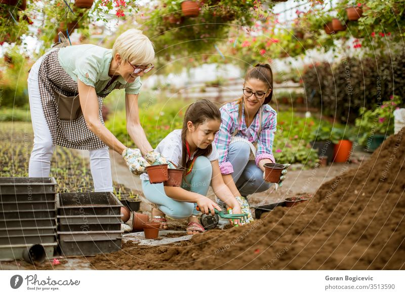 Senior woman, young woman and little girl plant flowers in pots at greengarden activity botany caucasian cultivate cultivating cute environment gardener