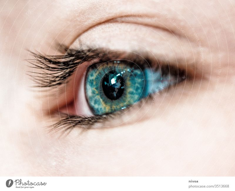 boys eye Eyes Boy (child) Looking Face Child Human being Hair and hairstyles Colour photo Eyelash Blue Green Close-up Detail Makro Skin eyes opened 1 Light Day