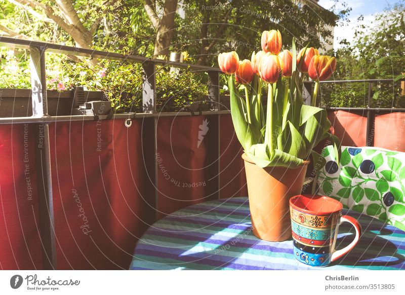flower vase and coffee cup on the balcony Flower vase tulips Coffee cup Balcony Sun variegated Table tablecloth green spring Deserted Colour photo Tulip Bouquet