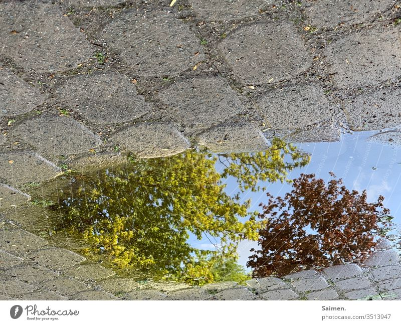 upsidedown Puddle reflection tree Nature paved Paving stone Treetop Water Exterior shot Reflection Wet Rain Street Weather Deserted Bad weather Environment