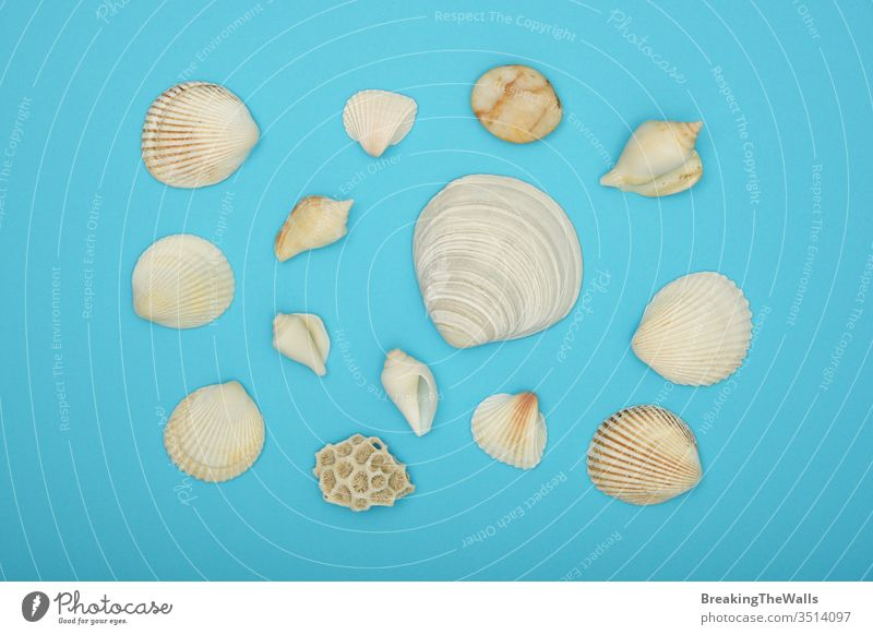 Assorted sea shells over blue background Seashells mix assorted group paper closeup flat lay layout color colorful directly above top view high angle elevated