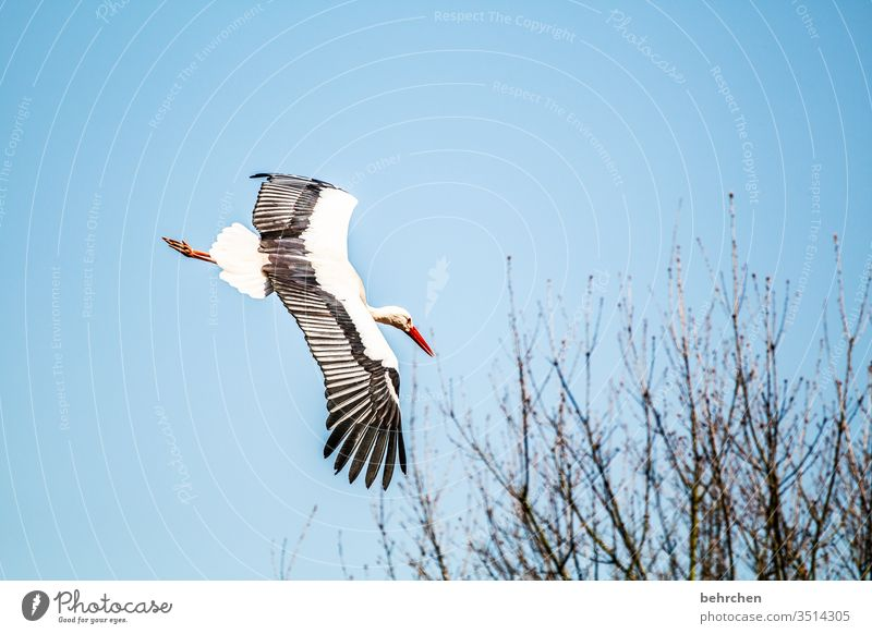 high achiever Animal Wild animal Contrast Light Exterior shot Colour photo Fantastic Sky Freedom especially birds Stork Beak Flying Branches and twigs tree