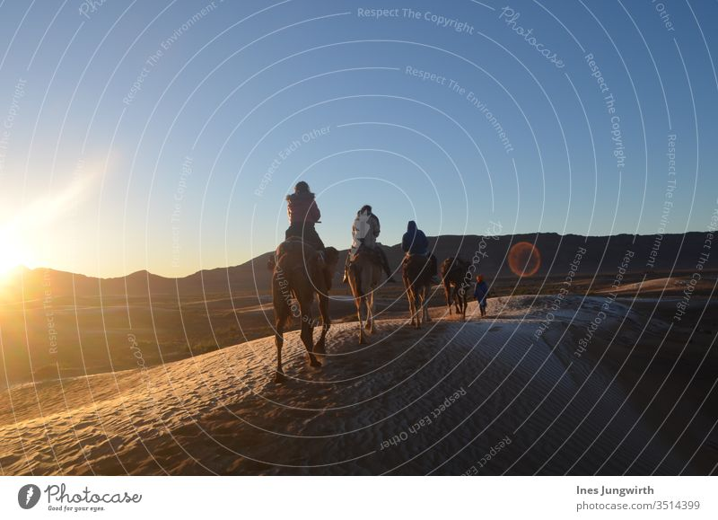 riding through the Sahara desert in Morocco Dromedary Camel Sahara Desert Sand Hot Sunset Sunbeam Exotic Visual spectacle Exterior shot Africa Colour photo