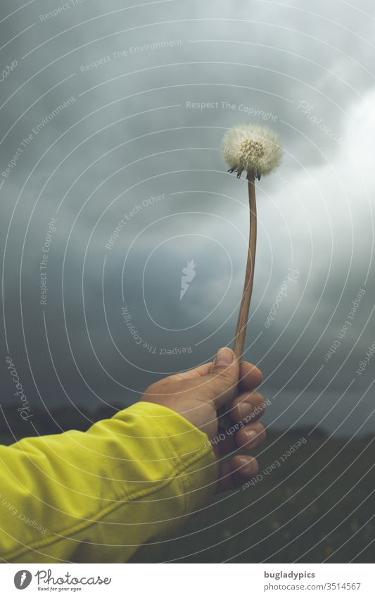 Person holds a dandelion like a magic wand towards the sky with dark clouds, as if he wants to conjure away the bad weather. All you can see is the person's arm. She is wearing a yellow jacket.