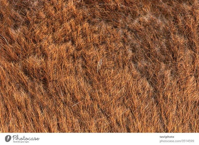 llama fur detailed texture material mammal sheep beige textured closeup surface background animal wool skin soft furry woolly fluffy camel pelt livestock orange