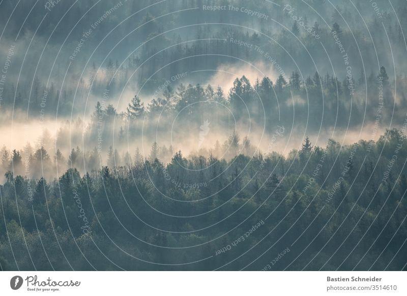 morning fog in the Elbe Sandstone Mountains, Saxon Switzerland Elbsandstone mountains Elbsandstein region Sunrise Hiking Sunlight Morning fog Fog tree Sunset