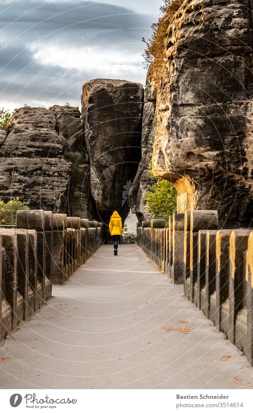 Fantastic morning on the Bastei in the Elbe Sandstone Mountains Panorama (View) Elbsandstone mountains Rock Landscape Hiking Nature rathen hillock Forest tree