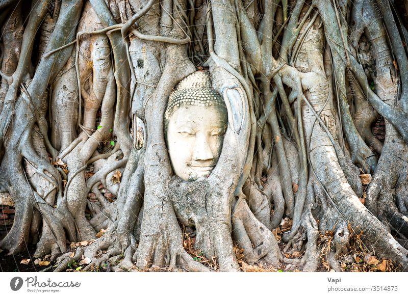 Buddha head in tree roots in ruins of Wat Mahathat temple. Ayutthaya, Thailand ayutthaya buddha thailand ayuthaya historical mahathat tourism religious unesco