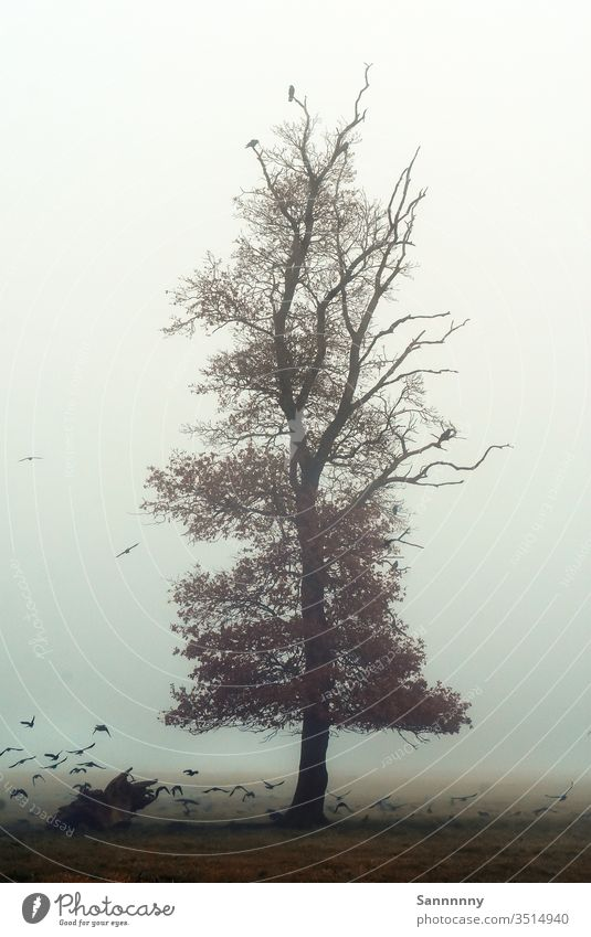 Mystic Tree tree Fog birds November Gloomy Dawn Majestic Painting and drawing (object) birdwatching Nature Love of nature