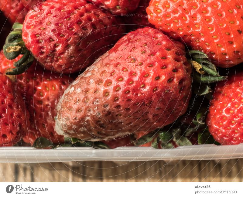 Rotten strawberries in plastic container bacterium bad berry biological closeup decay food fruit fungal fungi fungus garbage macro mildew mold moldy mouldy