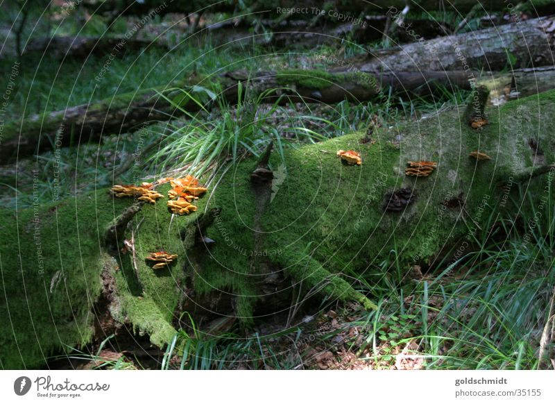 Tree Green Leaf Forest Broken Mushroom Sunbeam