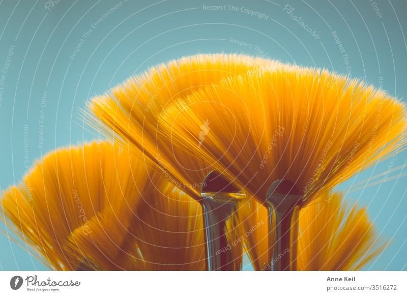 Orange shining fan brushes like a bouquet of flowers with contrast in the background Bouquet Illuminate Light Contrast