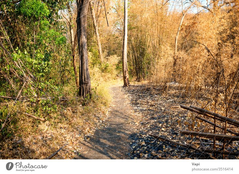 Dry trees and ashes in burnt bamboo forest wood fire dark landscape damage nature natural environment burned destruction disaster outdoor coal carbon charcoal