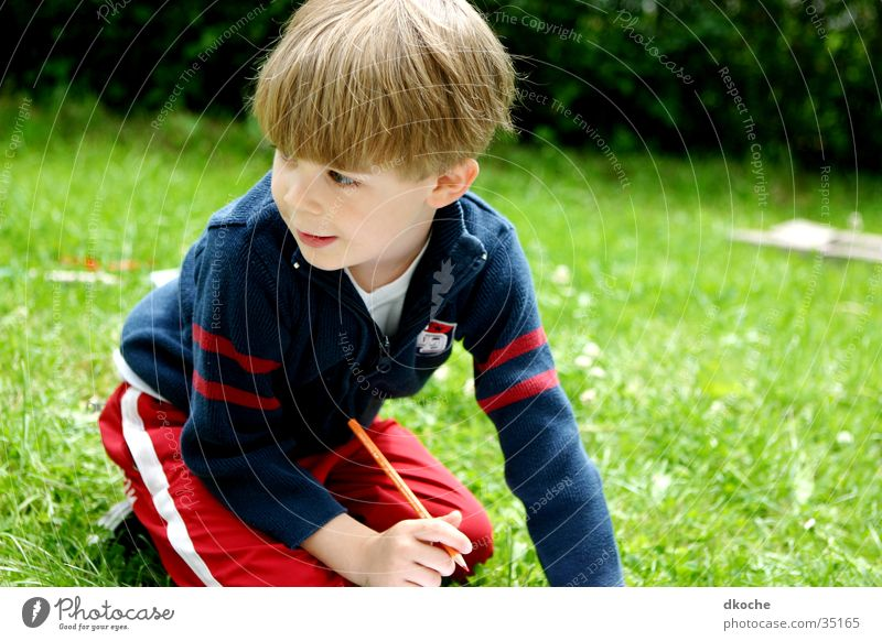 Child Boy (child) Meadow Playing Blonde