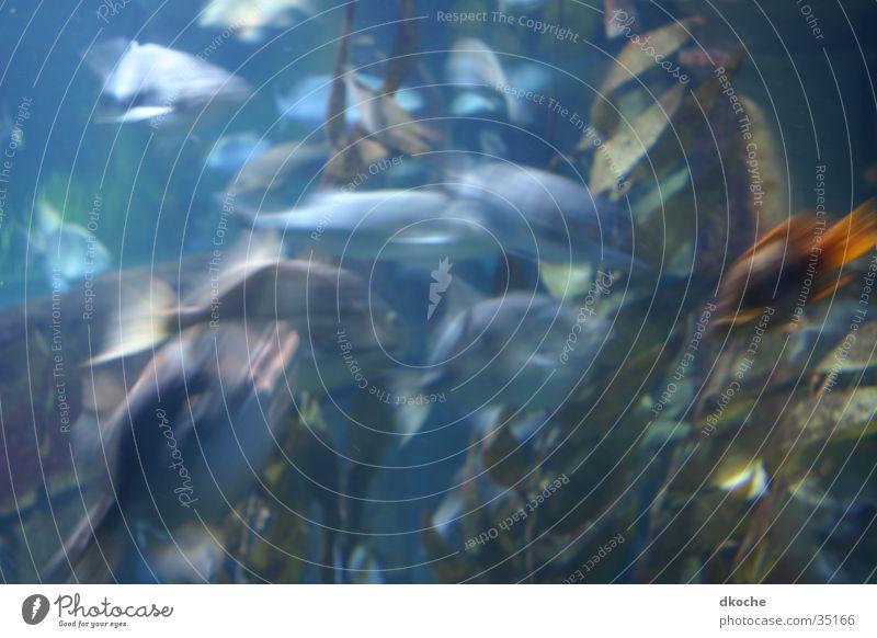 Fish blue Moody Ocean Aquarium Water Movement