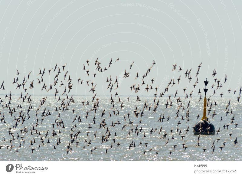 Buoy and flock of birds in the sunlight on the coast Navigation mark fairway Coast Purple Sandpiper seabird Flock Flying Sky Animal Sea bird Poultry Seagull