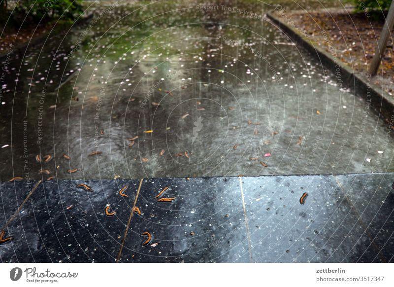 downpour Rain Puddle Rainwater Sidewalk Deserted Wet Precipitation wet raindrops summer rain Copy Space Water showers pelting
