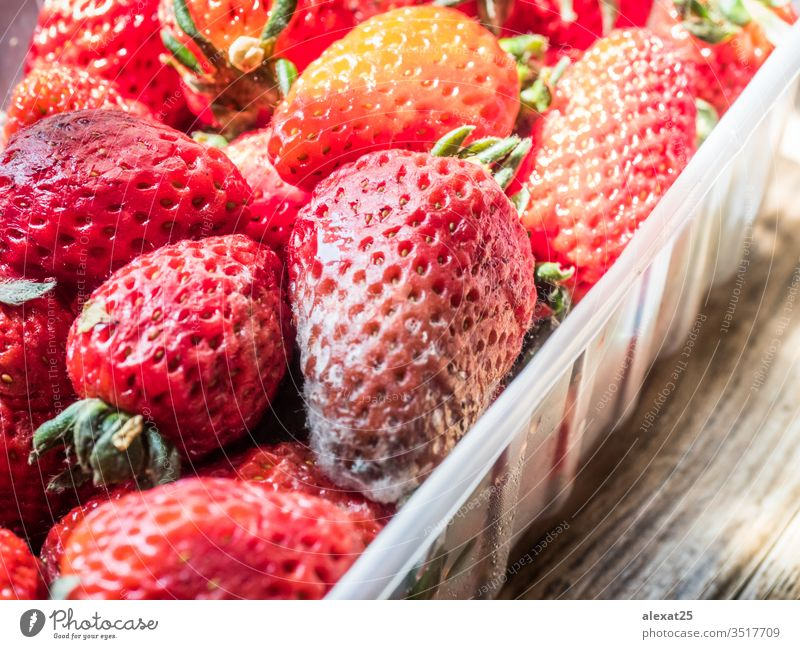 Rotten strawberries in plastic container bacterium bad berry biological closeup decay food fruit fungal fungi fungus garbage macro mildew mold moldy natural
