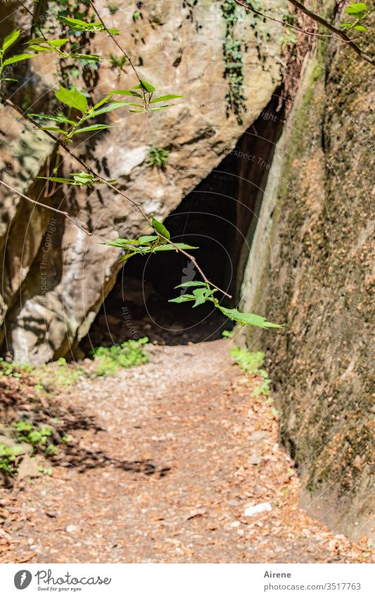 in the dark Cave fissure Fissure Entrance durchschlupf Narrow conceit Canyon narrow off obstacle Beautiful weather twigs Nature green Brown Mysterious peak