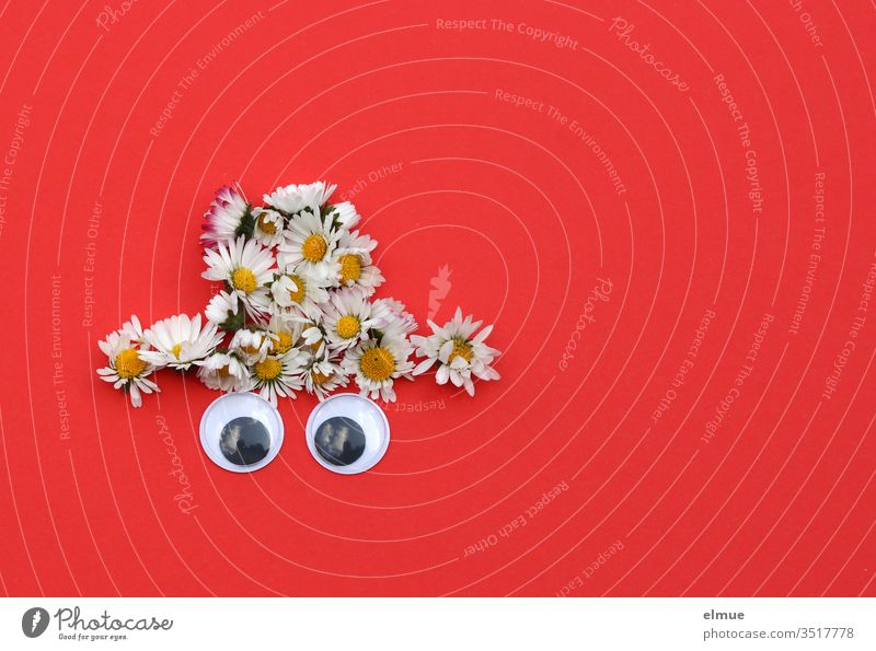 Daisy hat with two saucer eyes on red background Eyes Hat White Red Gimmick Made to measure Bellis decoration flowers Blossoming Blossom leave Close-up game
