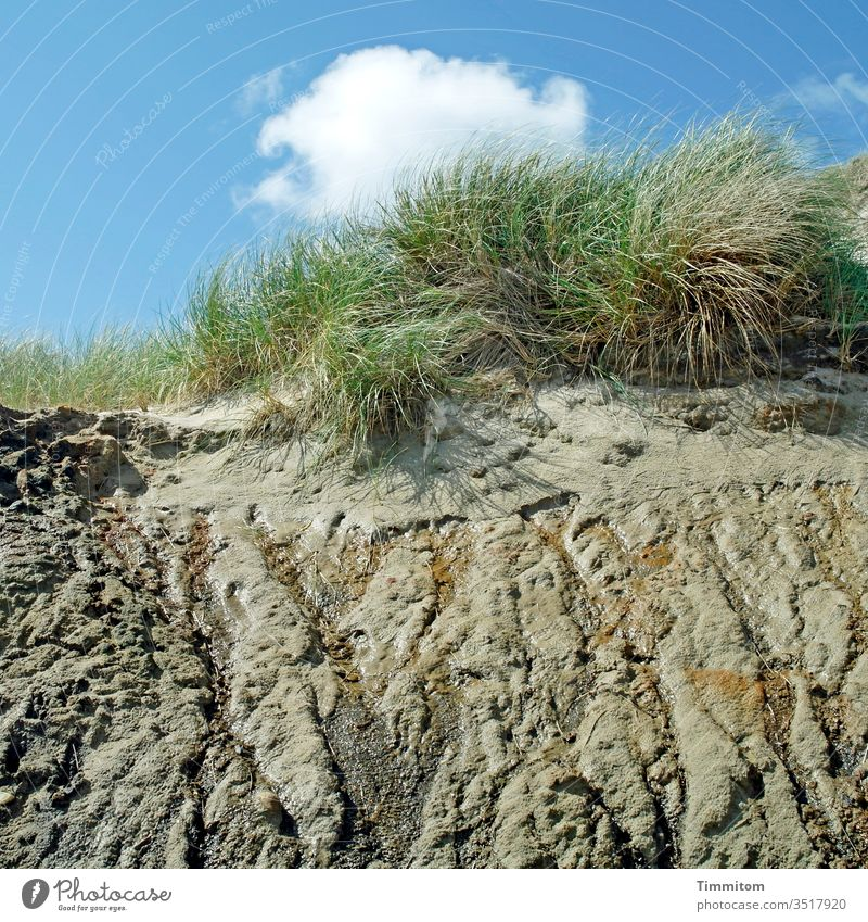 A water letting dune Marram grass Sand Nature Sky North Sea Denmark Deserted moisture Water Runlet Tracks Clouds Blue green White Brown