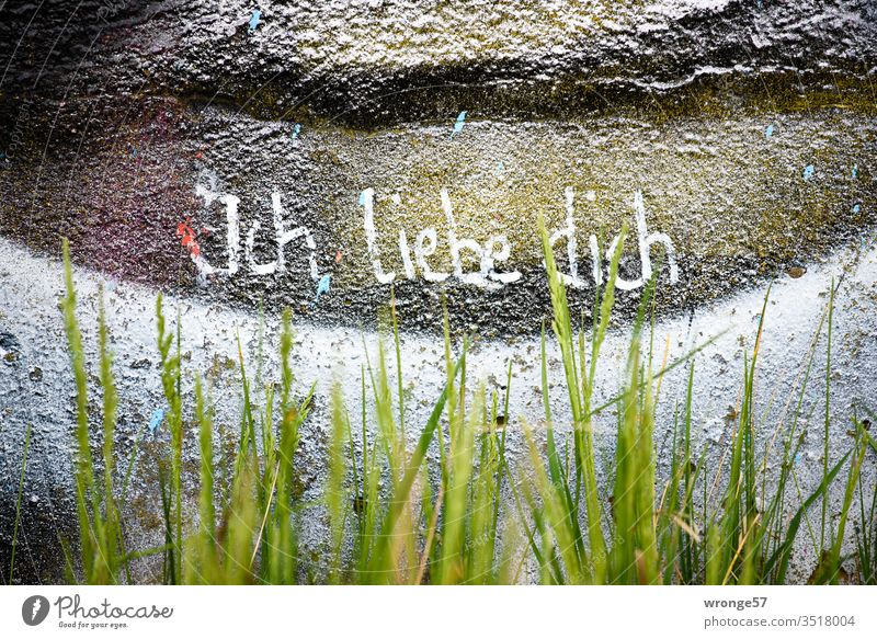 Behind green grass is written with white paint I love you on a graffiti painted wall Graffiti writing Love white color Wall (building) Wall (barrier) Emotions