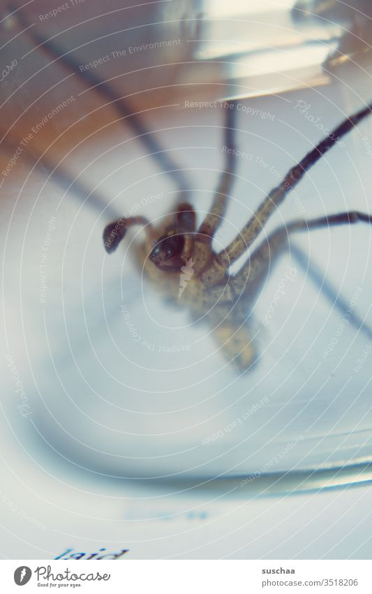 spider on the edge of a glass jar Spider disgusting phobia Creepy arachnophobia arachnid Spider legs Fear Disgust Crawl Threat Captured Transparent