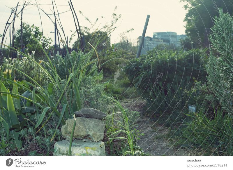 a little garden in the middle of the city Town urban Urban gardening Garden do gardening green Grass plants bush Agricultural crop ornamental plants herbs