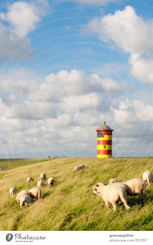 Sheep at the Ottoturm - Pilsum lighthouse Nature Landscape Clouds Coast Lakeside Beach North Sea Baltic Sea Ocean Lighthouse Farm animal Herd Relaxation Freedom