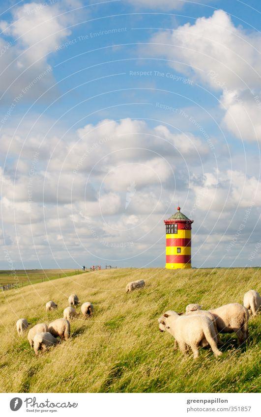 Sky Nature Relaxation Ocean Landscape Clouds Beach Coast Freedom Germany Horizon Illuminate Lakeside Baltic Sea North Sea Sheep