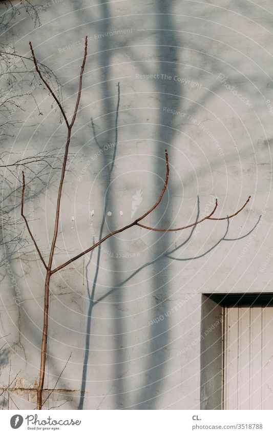 branch and wall Twig Twigs and branches Wall (building) Gray Gloomy dreariness Sparse Window Branch Esthetic Autumn Shadow tree Wall (barrier) Exterior shot