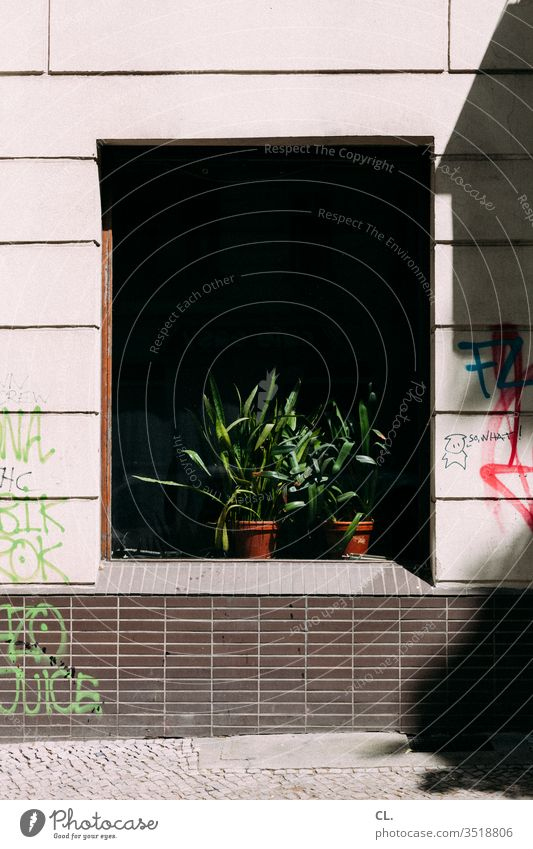 so what Plant Pot plant Window Graffiti Wall (building) urban Decoration Gloomy Foliage plant Houseplant Flowerpot Colour Daub Dirty Town Exterior shot