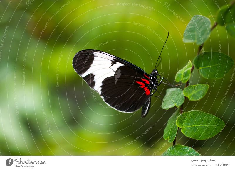 Nature Blue Green Summer Plant Red Leaf Black Environment Freedom Garden Flying Aviation Wing Butterfly