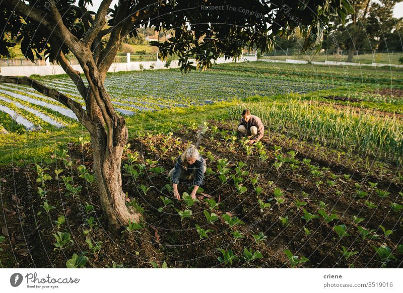 Farm workers checking on vegetables on field together sustainability woman produce fresh garden farmer nature green harvest organic agriculture healthy
