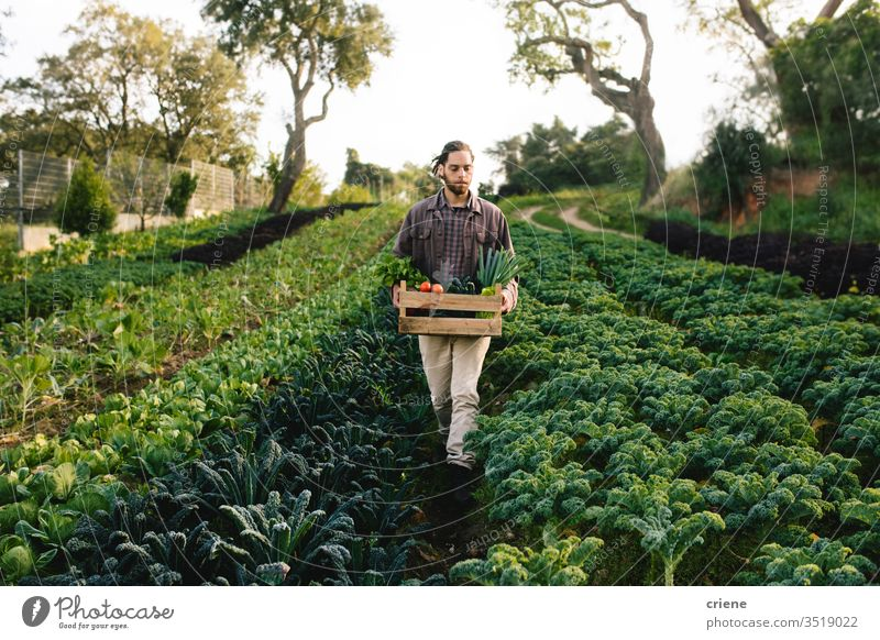Young farmer working on field harvesting vegetables kale salad business farming box cultivate freshness gardener men occupation environment plant food nature