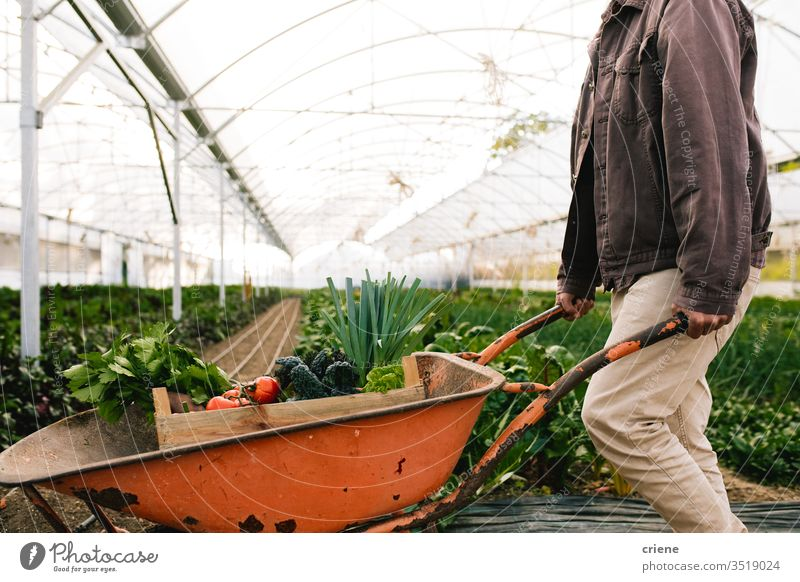 Farmer working in greenhouse pushing wheelbarrow box crate sustainability produce fresh garden farmer nature harvest organic agriculture vegetable healthy