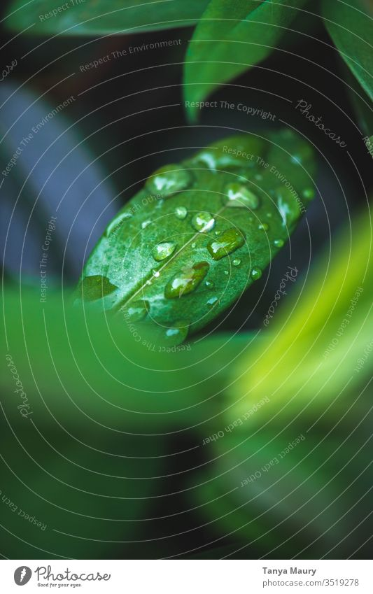 water drops on green plant Plant Leaf green Close-up macro Damp Foliage plant Dew Nature Wet Green Macro (Extreme close-up) rain drops Detail Botany