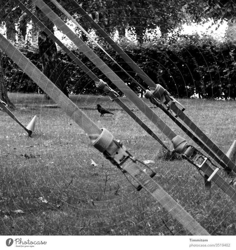 Under tension! lashing straps fore gel Meadow shrubby tight Deserted Circus tent Black & white photo trees