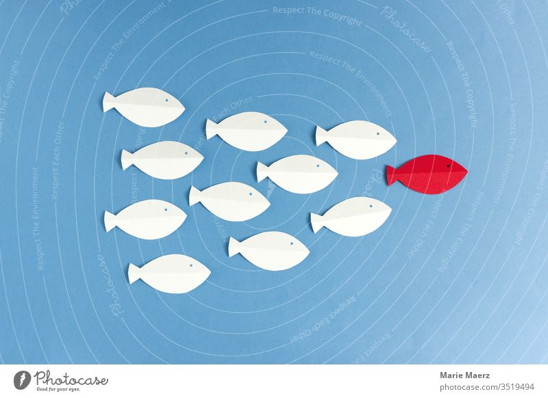 White fish follow red fish Illustration Team Business guided tour executive Target Success Colour photo Force paper cut Abstract Silhouette Minimalistic