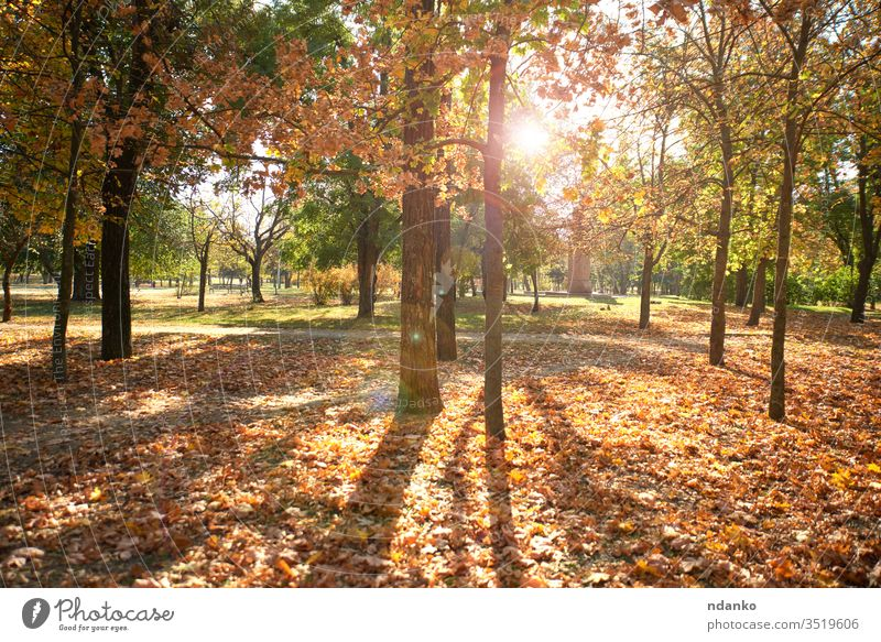 empty city park without people on an autumn day urban deserted nobody gold background beautiful beauty blur bokeh branch bright color colorful decoration
