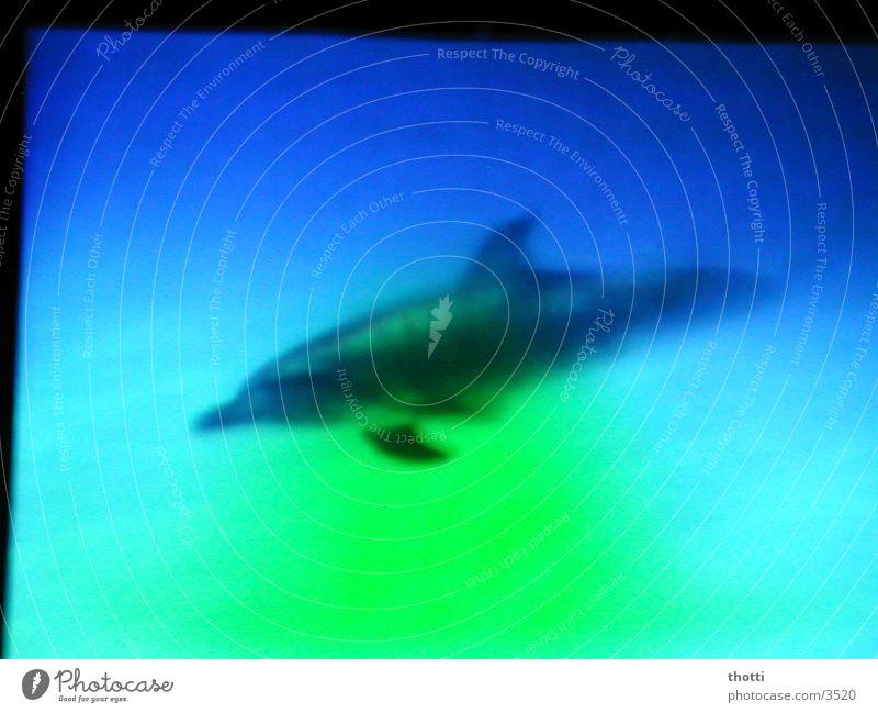 pinball Dolphin Green Ocean Transport Blue Underwater photo
