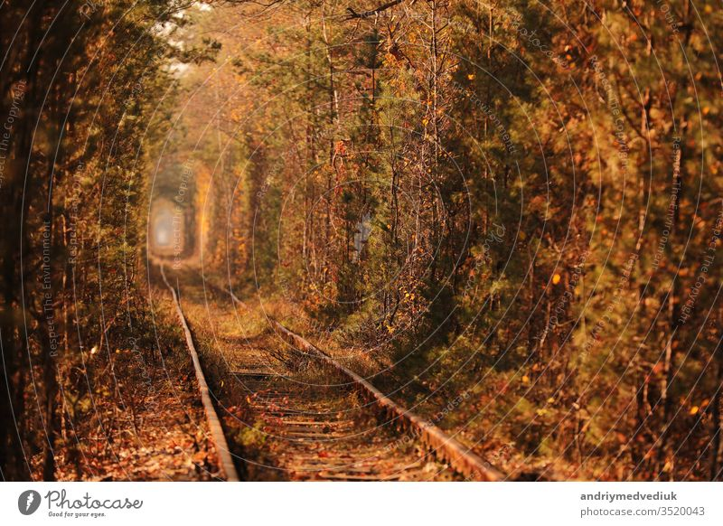 Tunnel of Love. Tunnel of Love in Ukraine. A railway in the autumn forest tunnel of love. Old mysterious forest. bambus beautiful beauty blue color environment