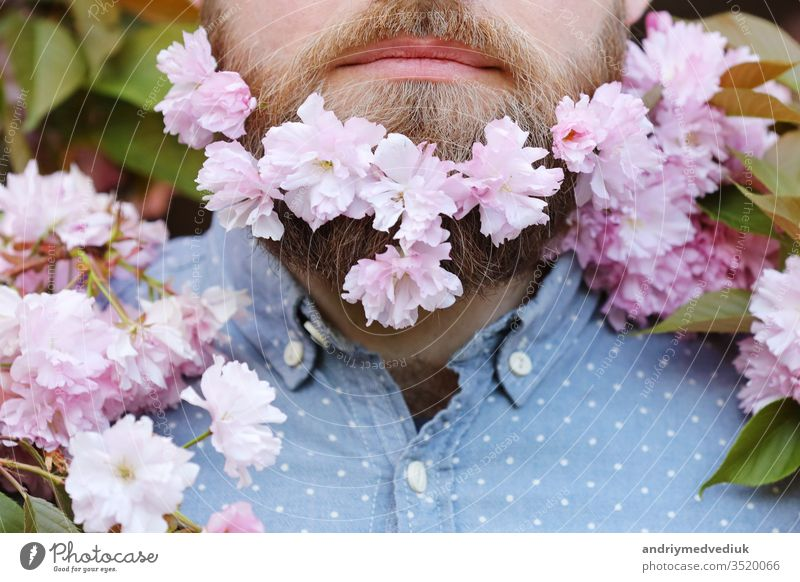 Skin care and hair care concept. Bearded male face peeking out of bloom of sakura. Hipster with sakura blossom in beard. Man with beard and mustache on happy face near tender pink flowers, close up.
