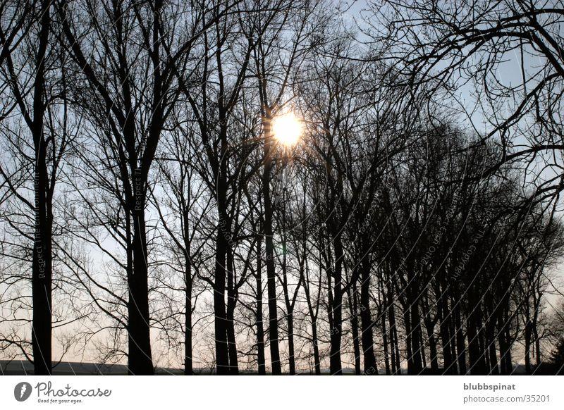 Tree Sun Dark Vest